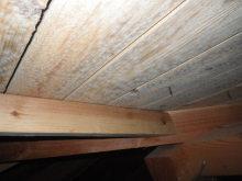 欠陥住宅を調査する建築士のブログ-カビ